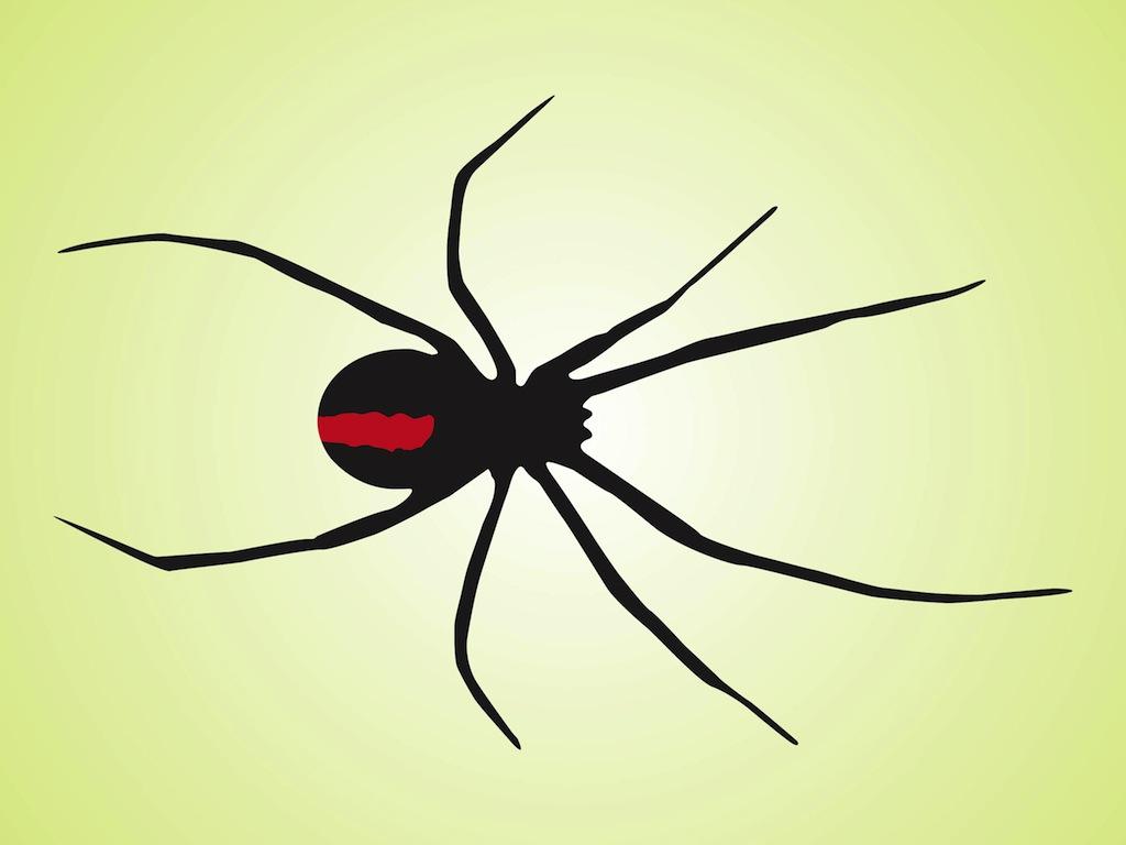 Black Widow Spider Wallpaper Black widow spider 1024x768