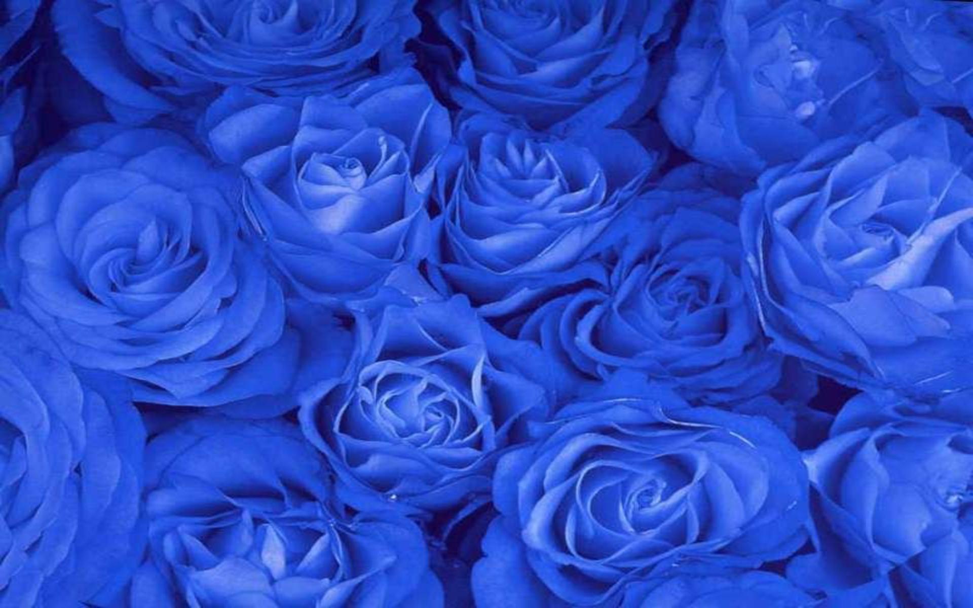 Как розы сделать синими