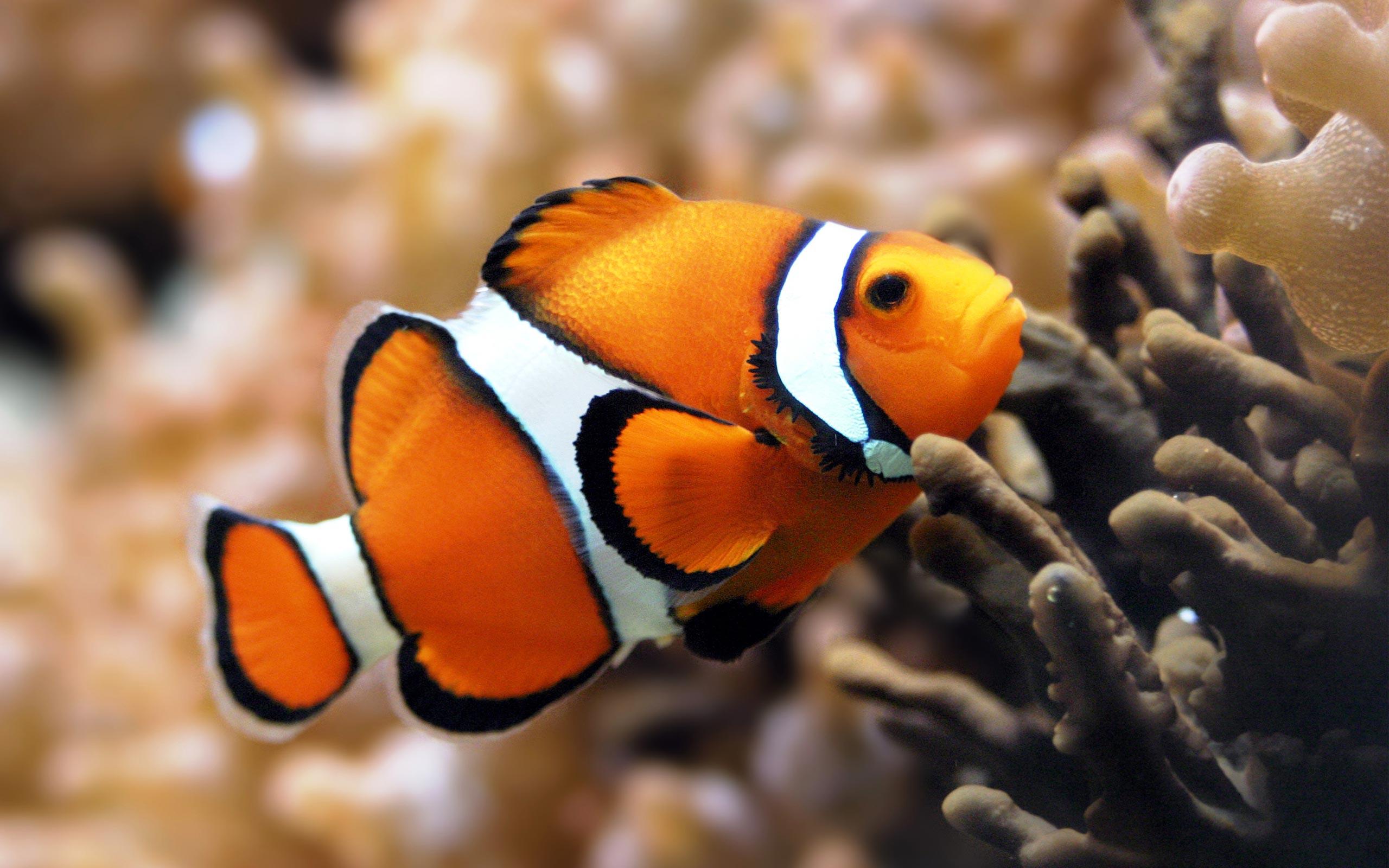 reef fish widescreen wallpaper High Definition Wallpaper HD 2560x1600