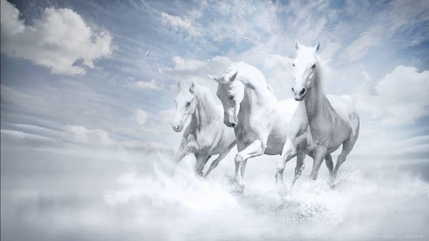 White Horse Desktop Wallpaper 1366x768
