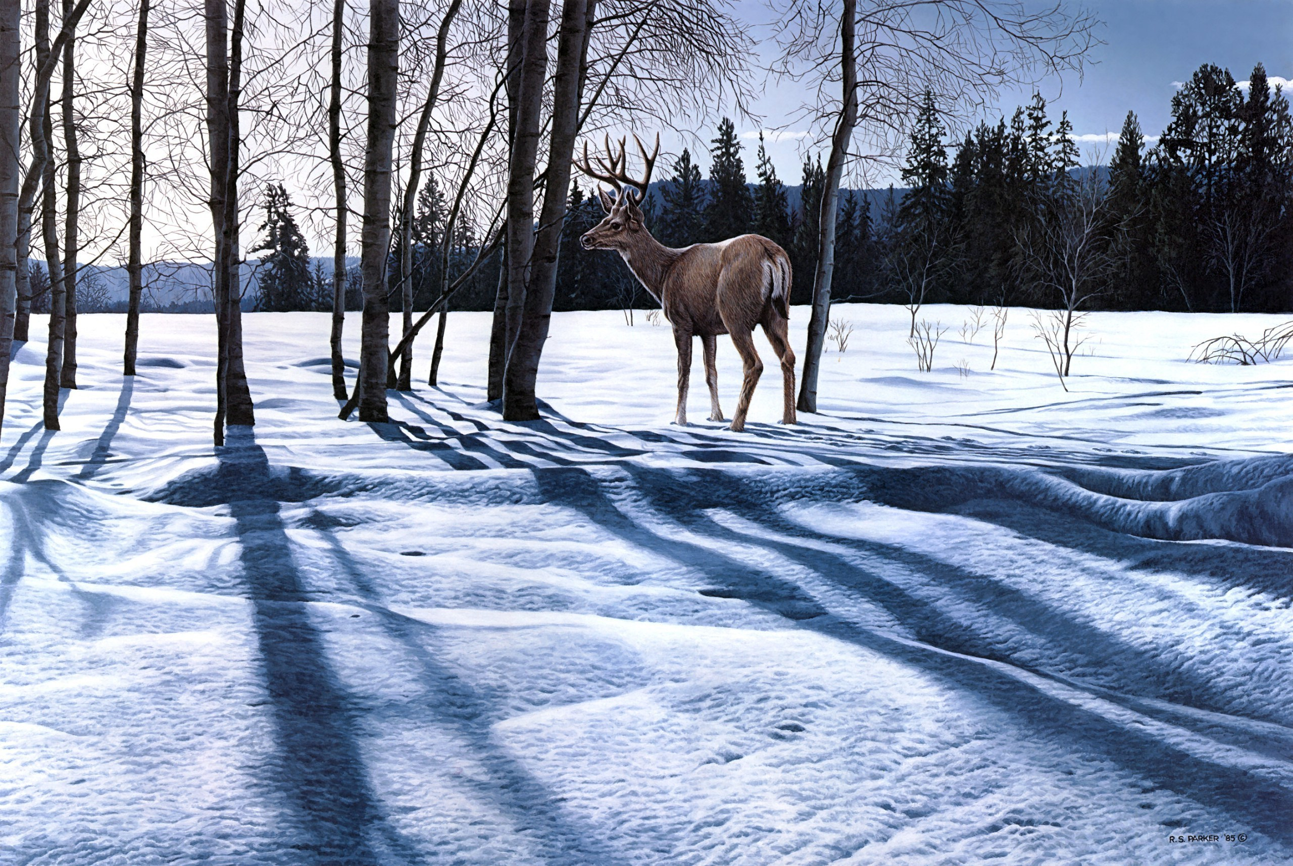 Landscape deer winter snow wallpaper 2560x1715 133377 2560x1715