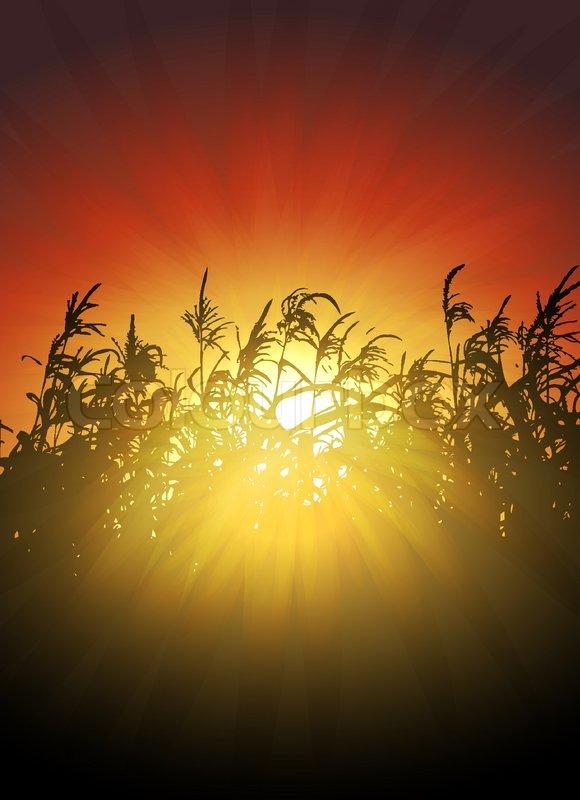 corn field vector 580x800