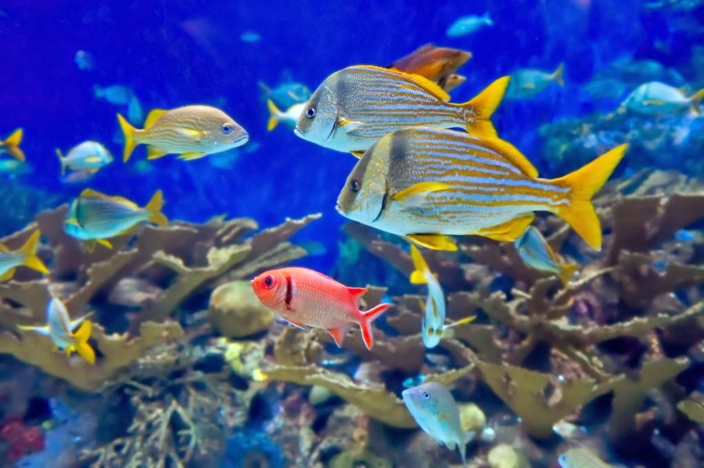 Gambar ikan hias ini sudahdikompress menjadi ukuran yang lebih ringan 1024x681