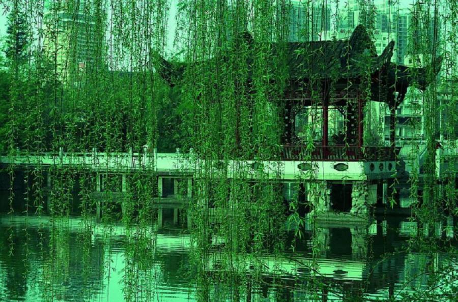 Weeping willow   Pixdaus 900x594