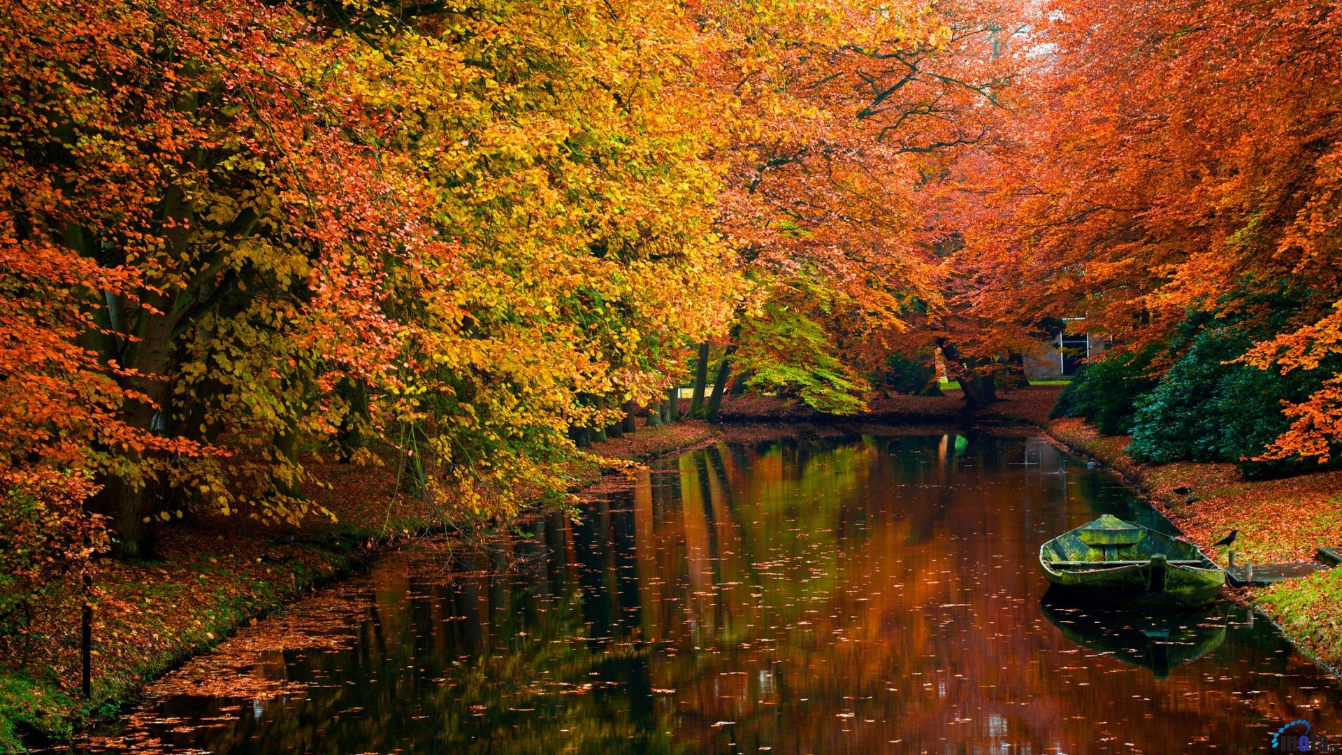 Download Wallpaper Autumn colors in the forest 1920 x 1080 HDTV 1080p 1920x1080