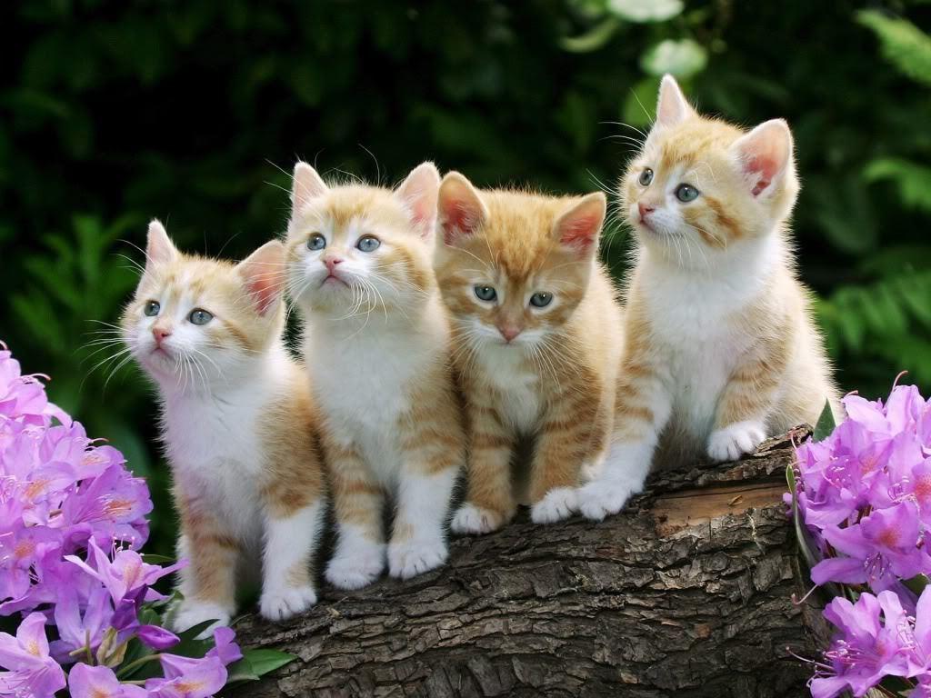 Kittens   catsparrots and butterflies Wallpaper 22790493 1024x768