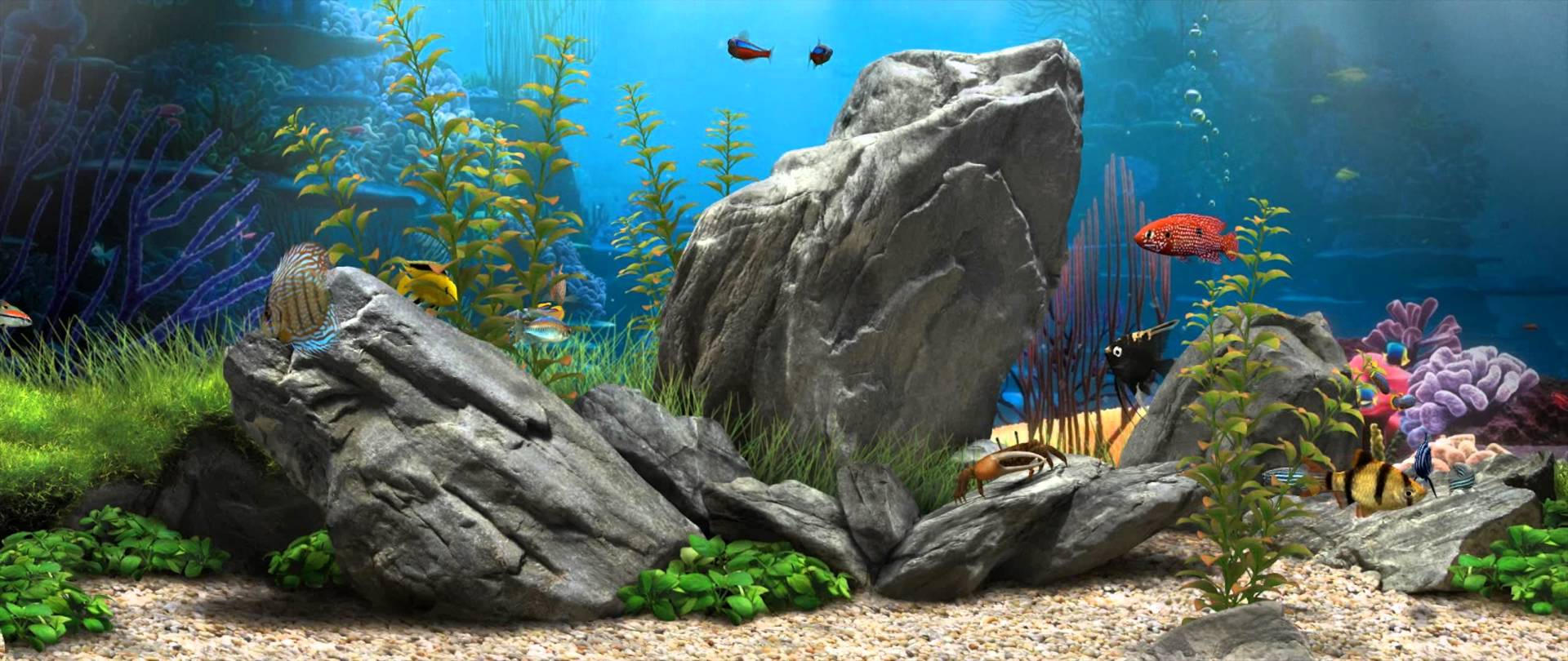 Dream Aquarium   219 [Live Wallpaper]   1080p 1920x810