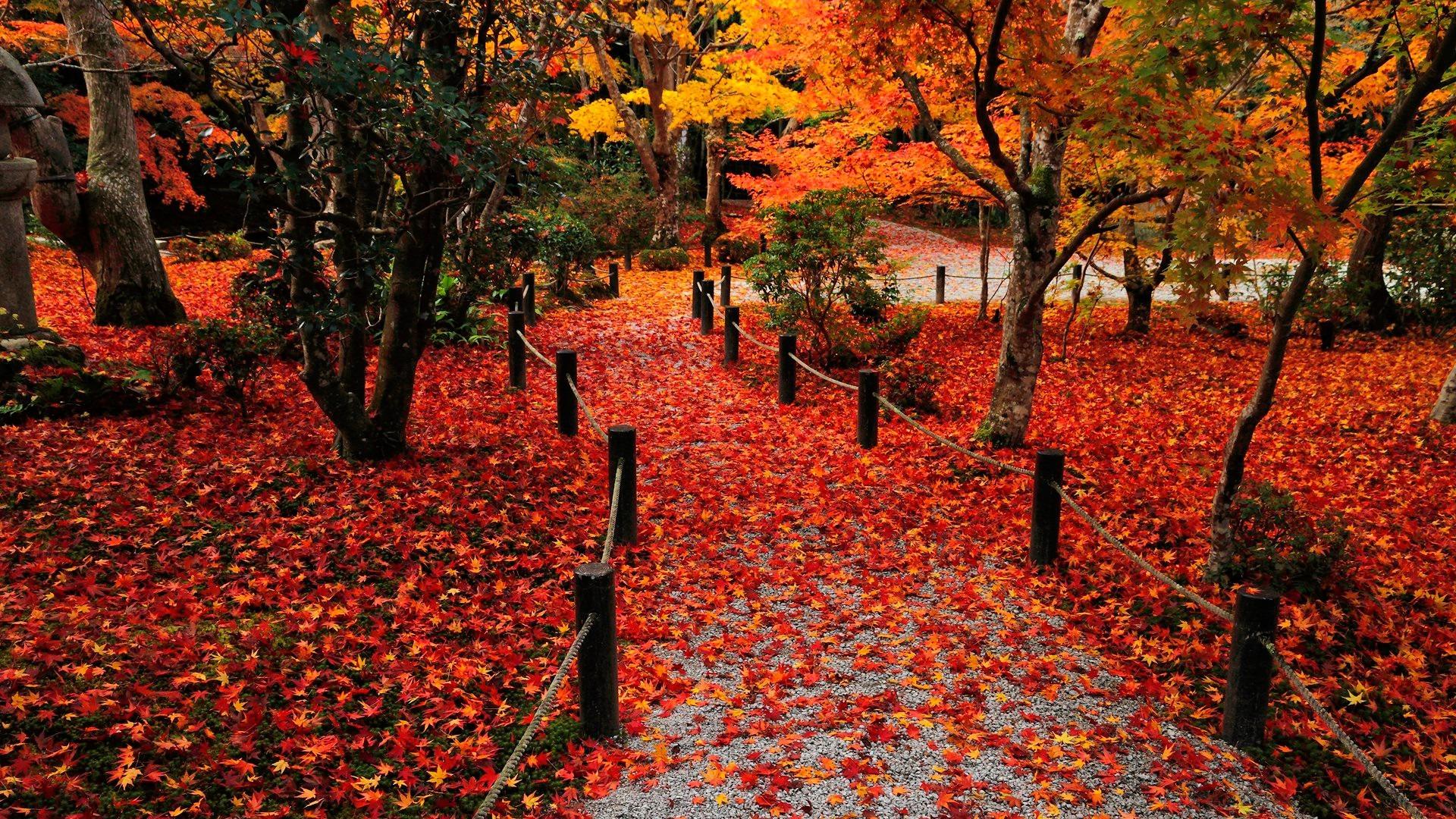 Autumn Leaves 1920x1080