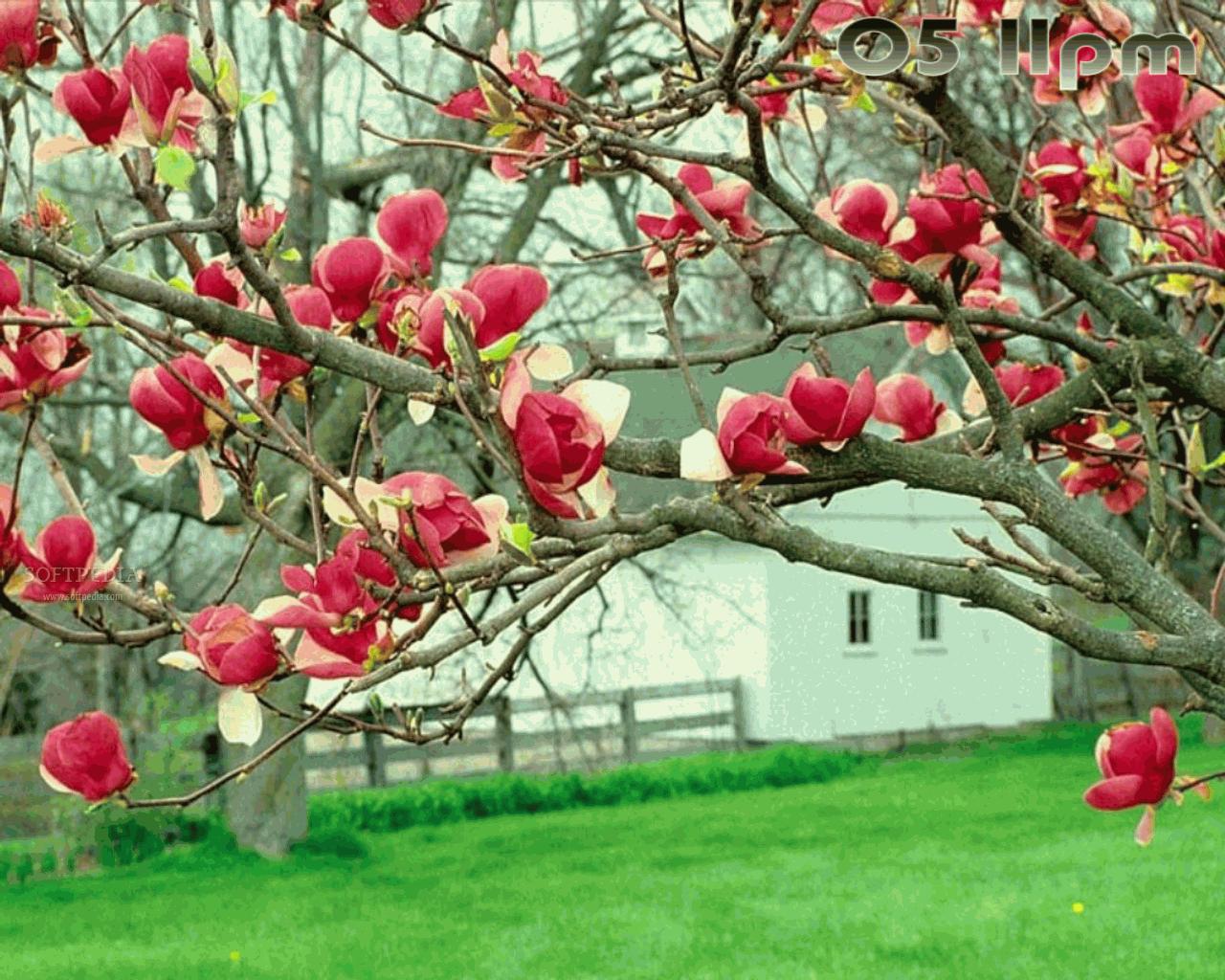 Free Spring Screensavers And Wallpaper Wallpapersafari