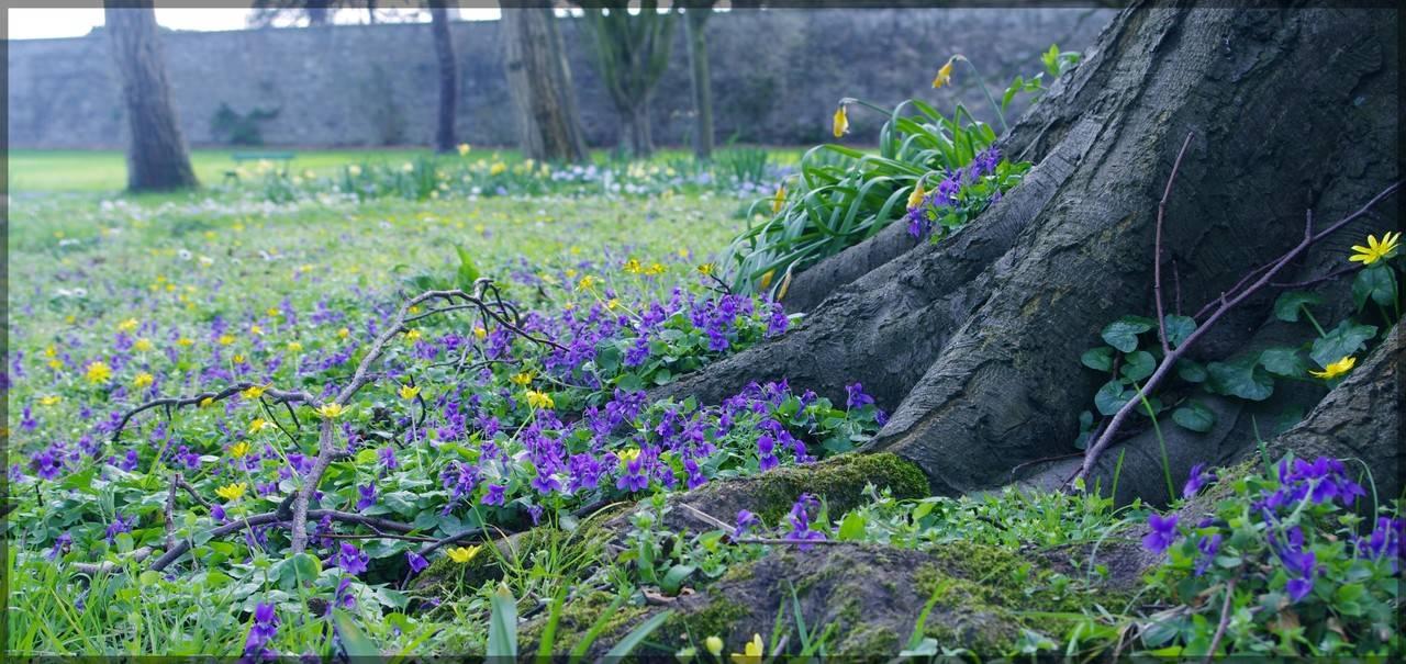 The Botanic Gardens Dublin Ireland   Ireland Wallpaper 1280x605