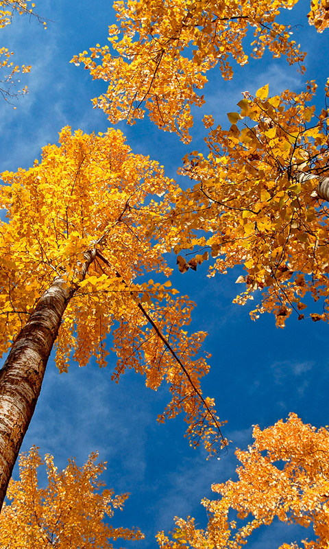 Indian Summer HD Live Wallpapers Live wallpapers HD for Android 480x800