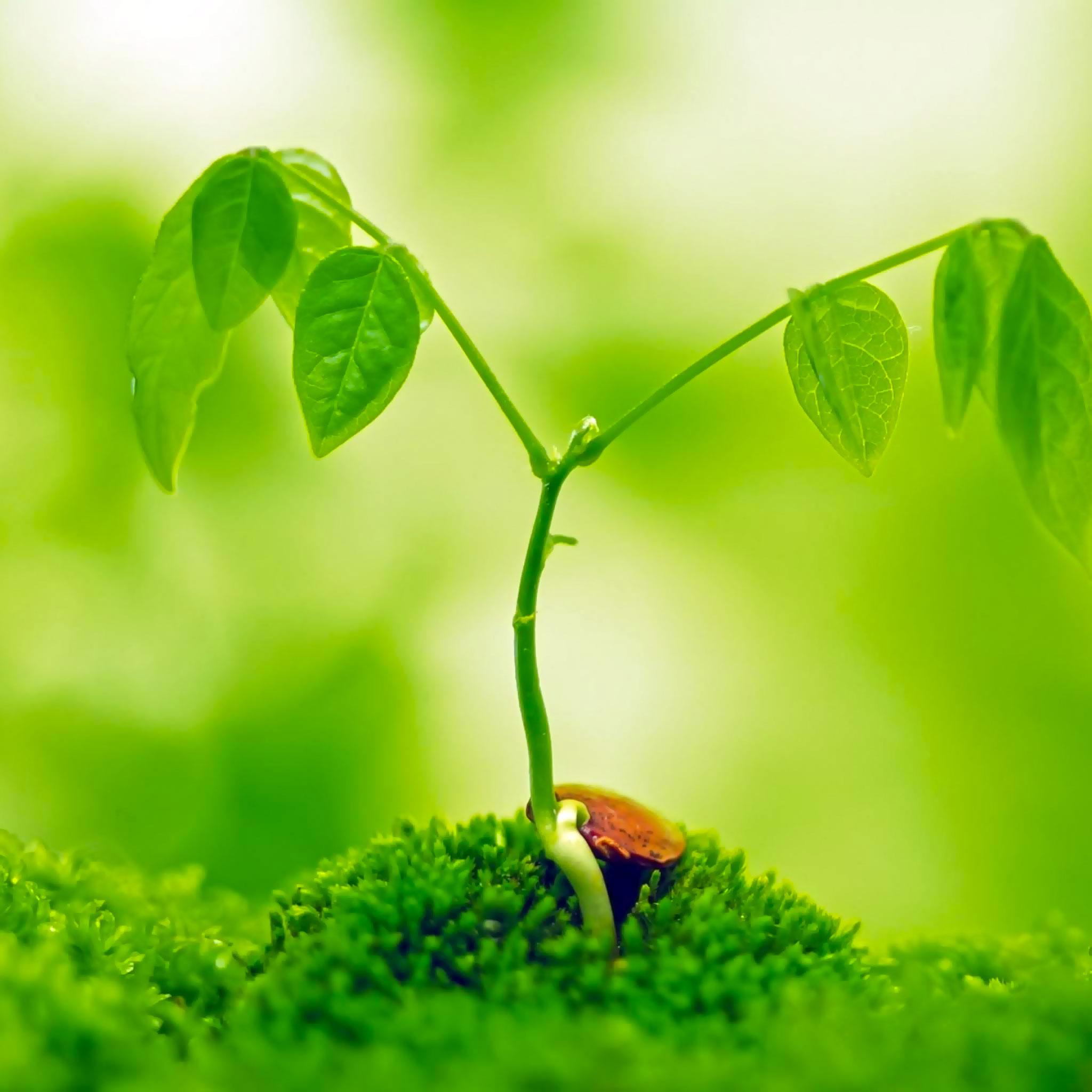 beautiful plant ipad wallpaper retina display 2048x2048