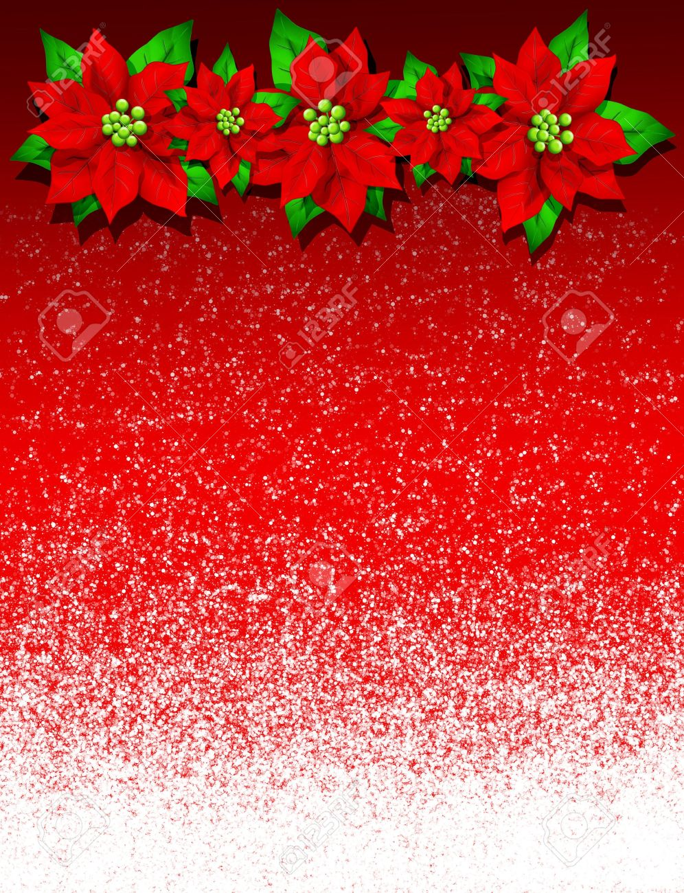 Christmas Poinsettia Card Background Stock Photo Picture And 996x1300