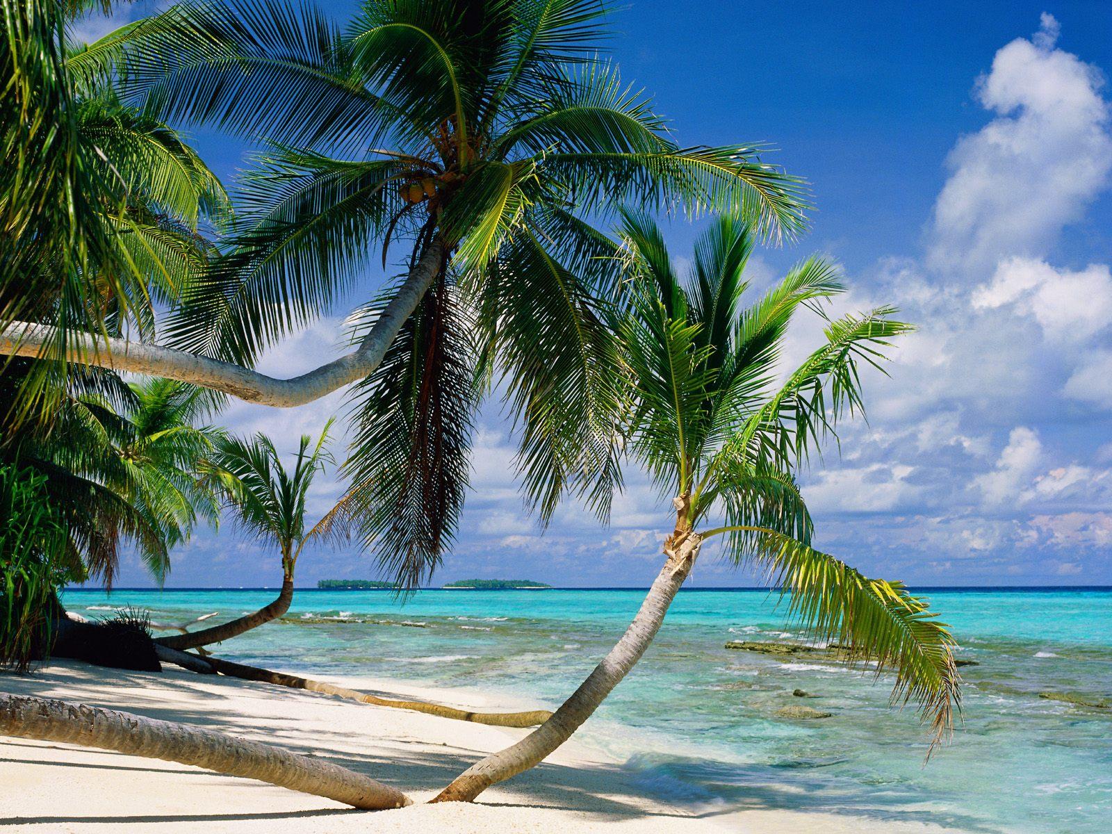 ... picture, Tepuka Island Tuvalu photo, Tepuka Island Tuvalu wallpaper