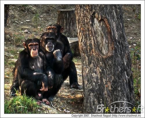 Download Monkey pg2 Screensaver 11 Monkey pg2 Screensaver 500x406