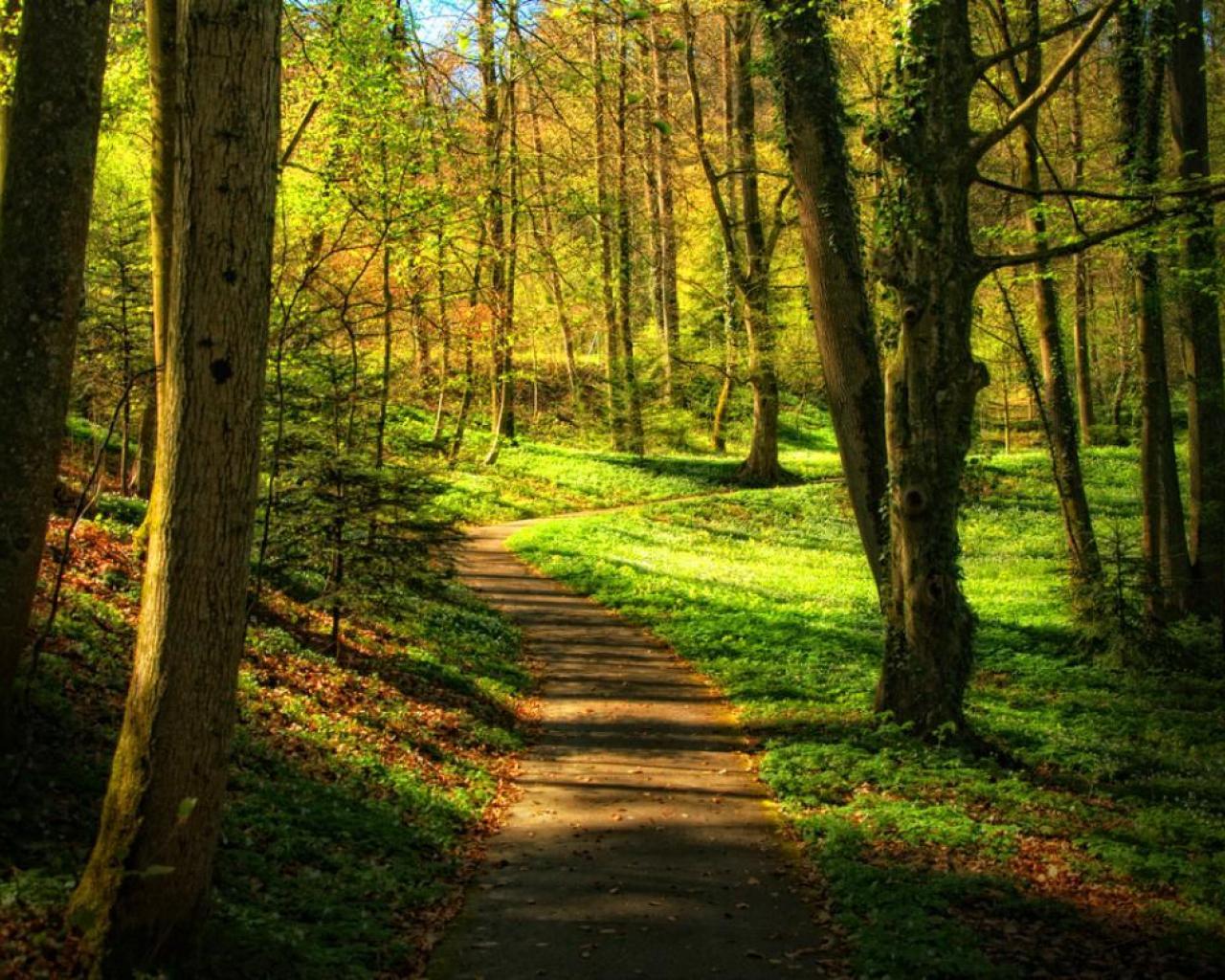 Walk In The Woods Wallpaper Wallpapersafari