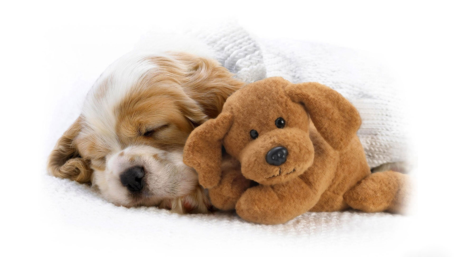 1920x1080px free puppy screensavers and wallpaper - wallpapersafari