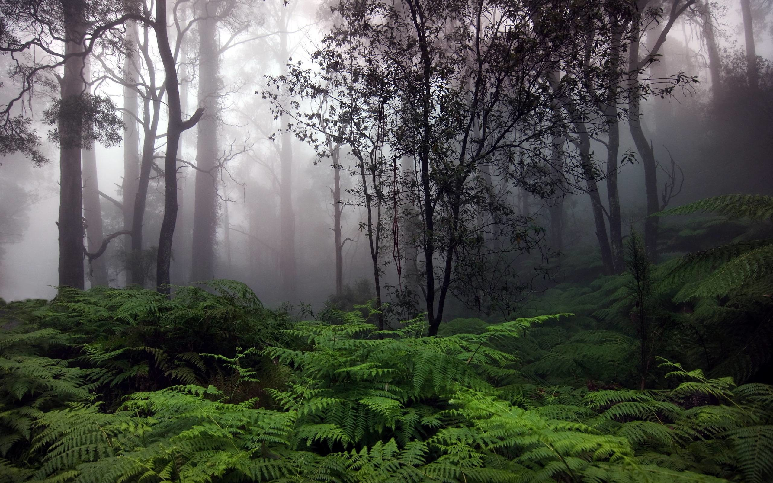 66 Rainy Forest Wallpapers on WallpaperPlay 2560x1600
