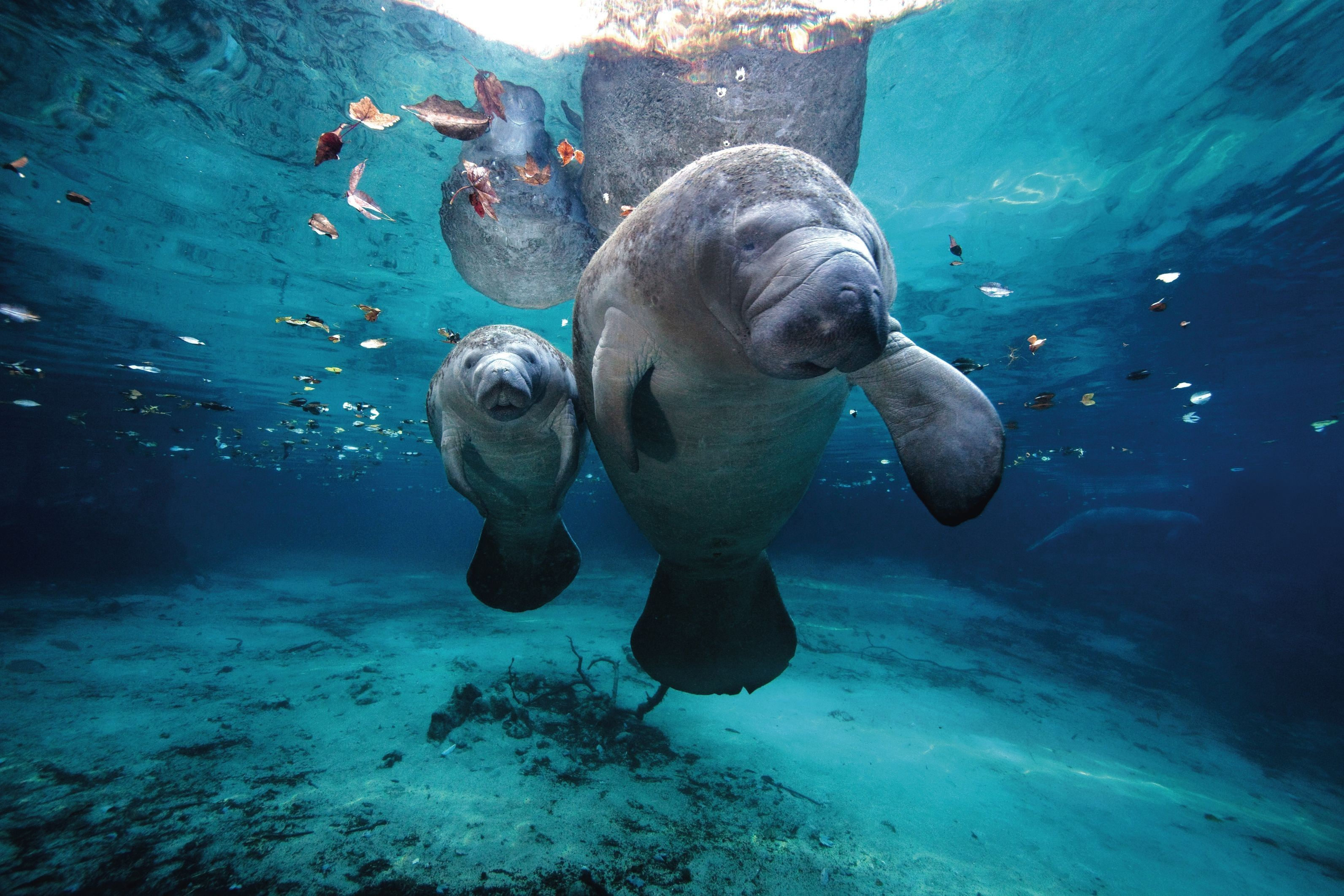 Top 27 Sea Animals Wallpapers In Hd: Sea Animal Wallpaper