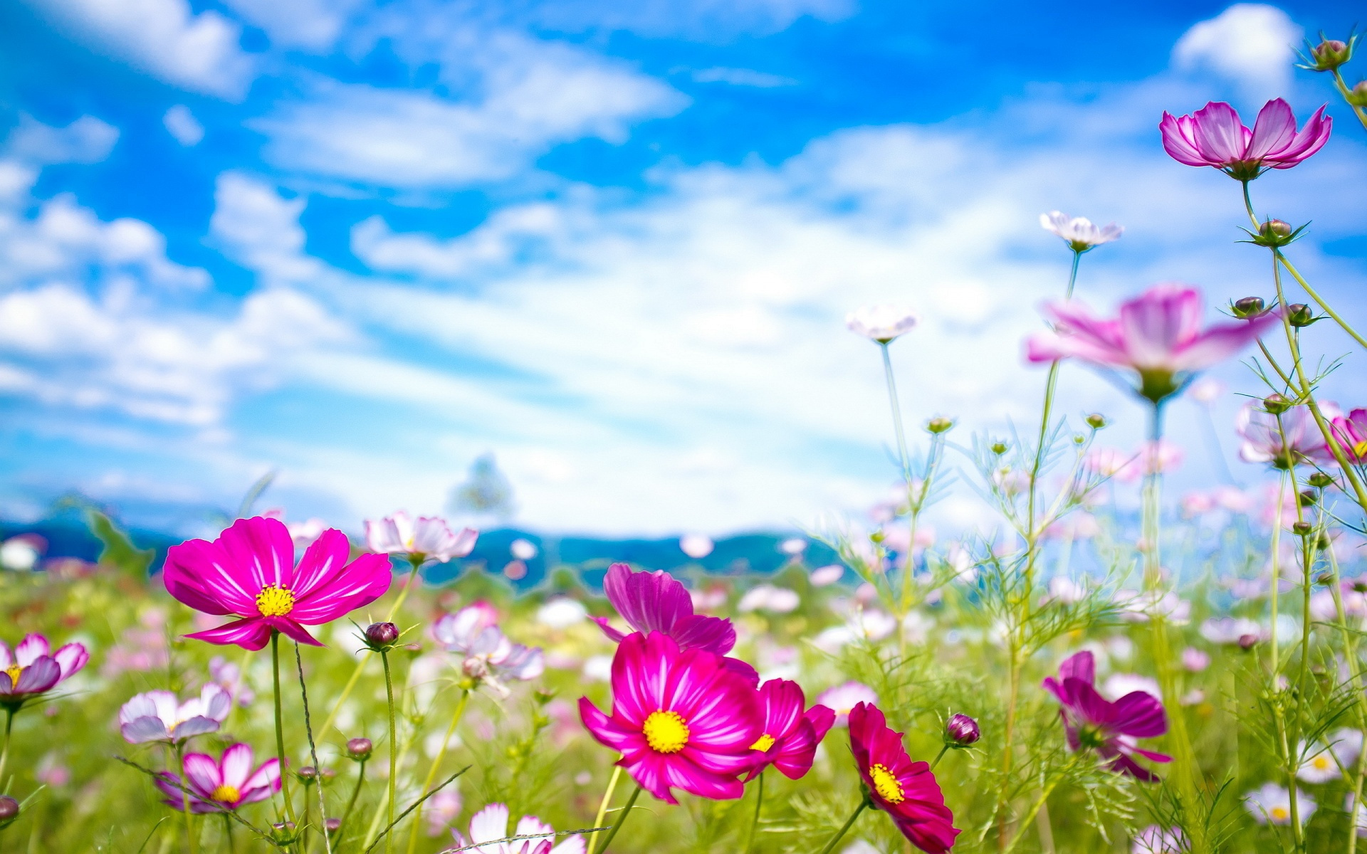 Pink Flowers Summer HD Wallpaper Widescreen ImageBankbiz 1920x1200