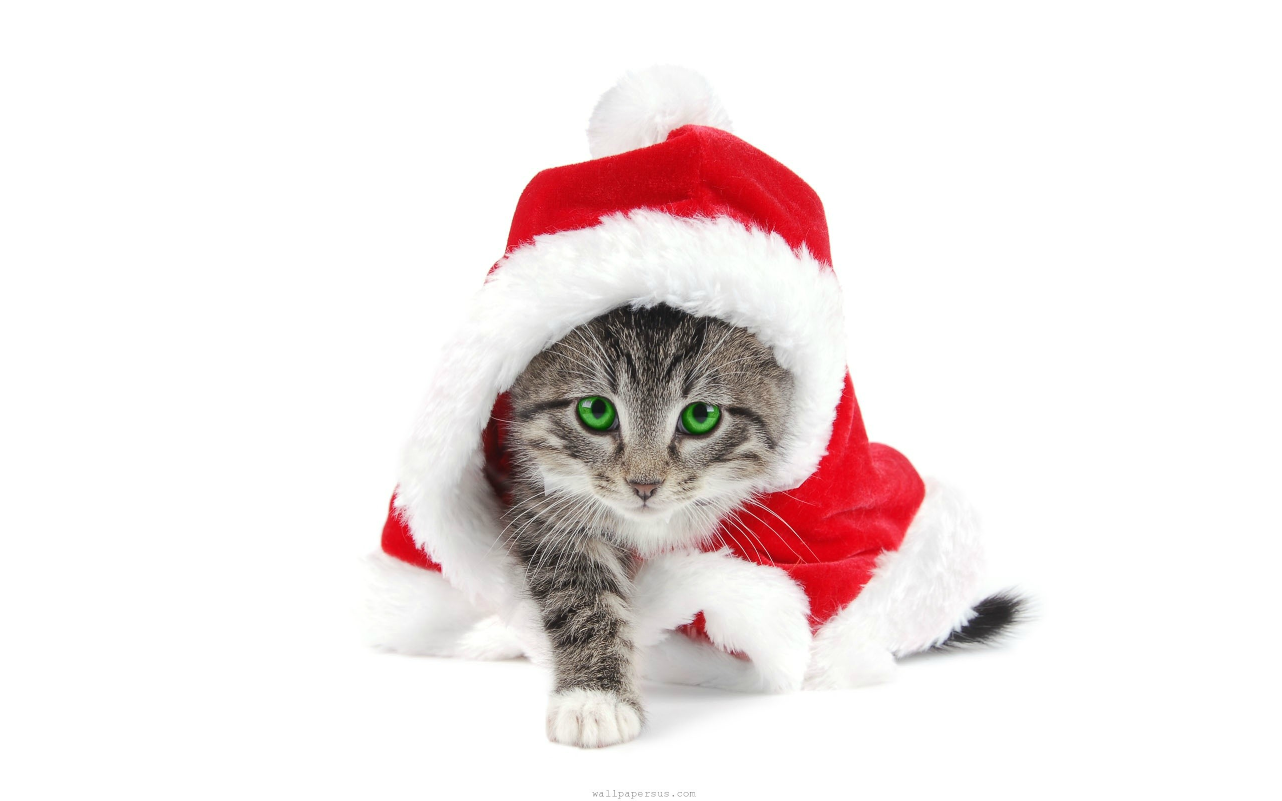 Grumpy Cat With Christmas Hat Holidays HD Wallpapers 1080p 2560x1600