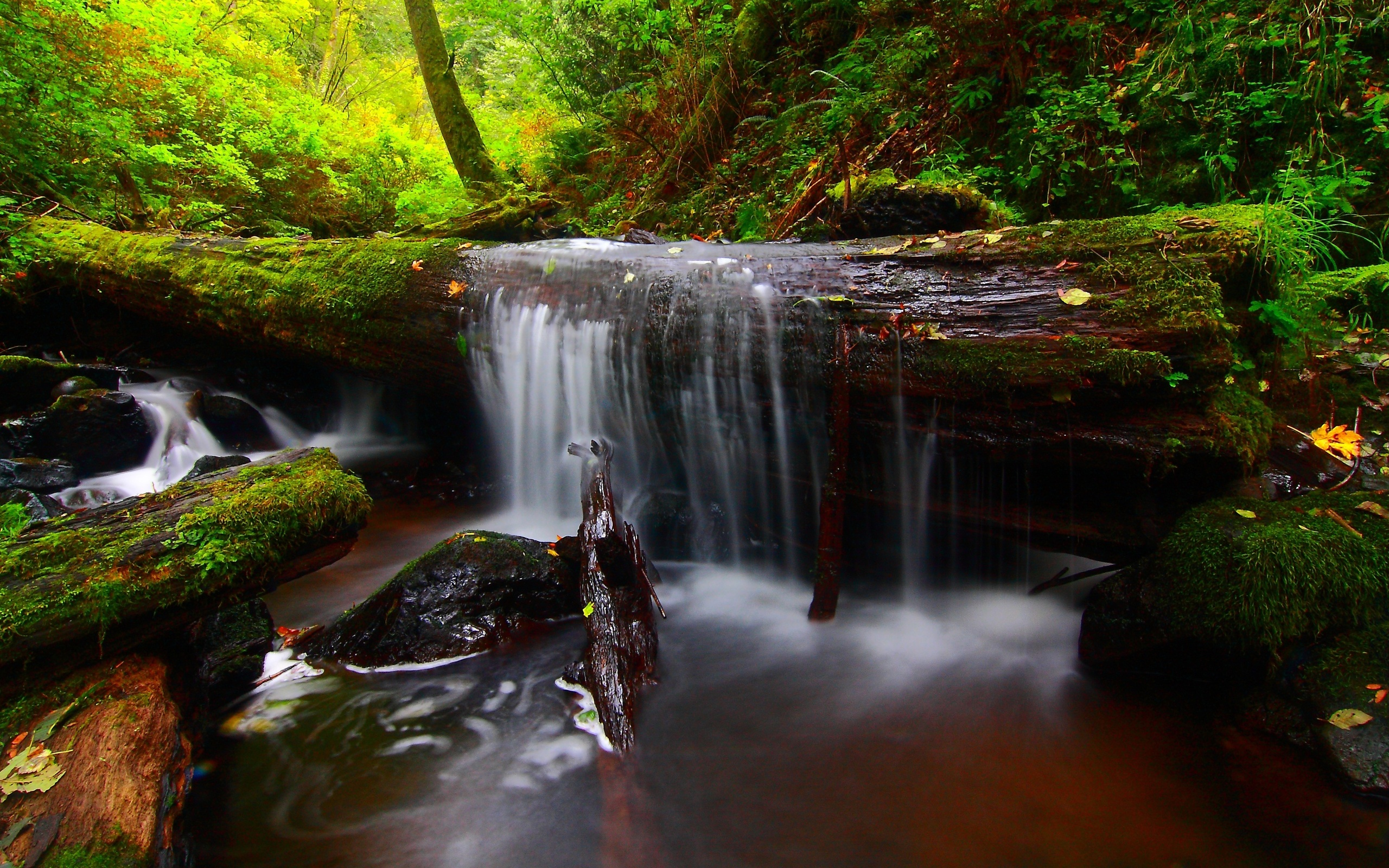 River In Forest Wallpaper