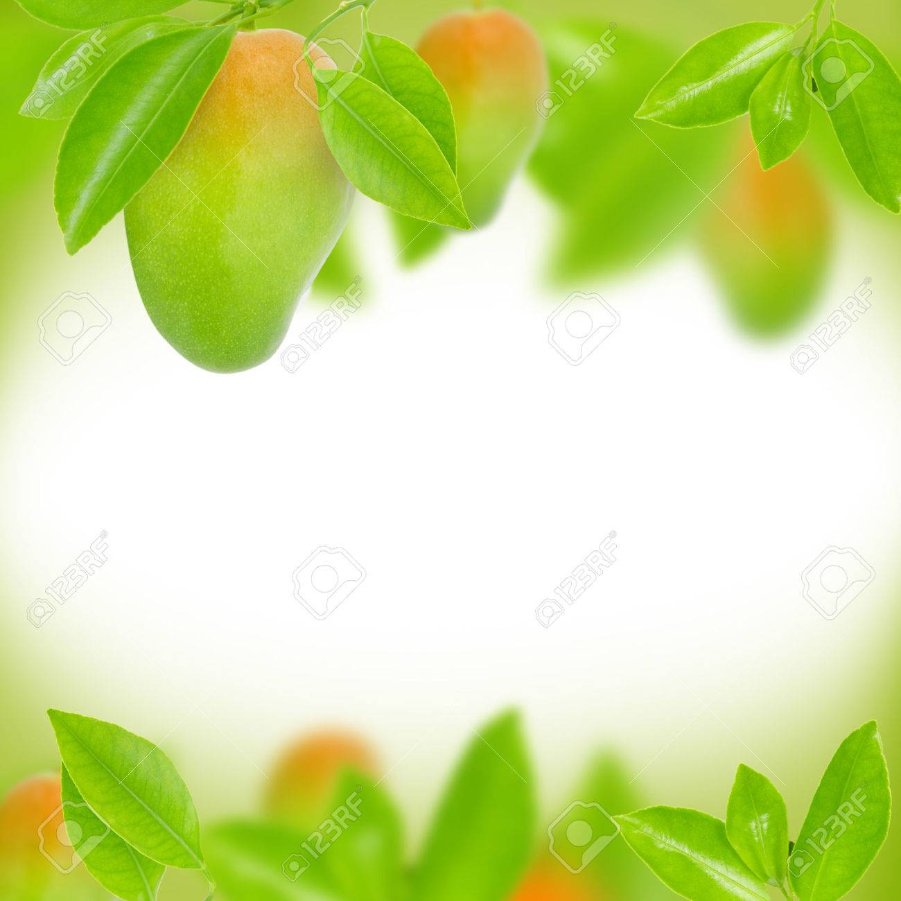 Abstract Background Made Of Mango And Leaves Stock Photo Picture 1300x1300