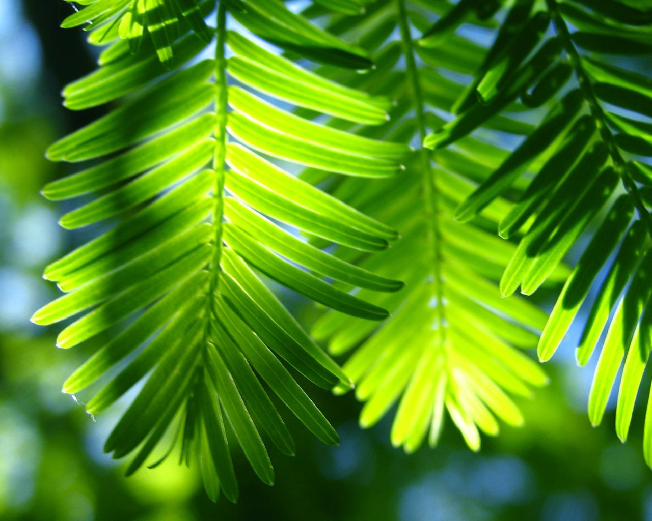 WALLPAPER GREEN LEAVES TROPICAL PARADISE 05JPG HD Wallpaper HD 1280x1024
