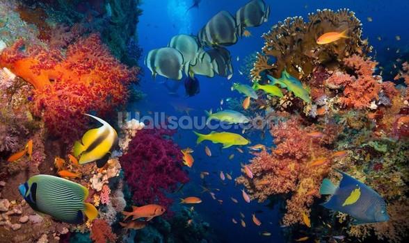 Coral and Fish Wall Mural Coral and Fish Wallpaper 588x350