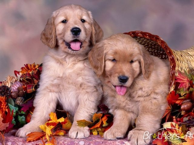 puppy wallpapers and screensavers 640x480