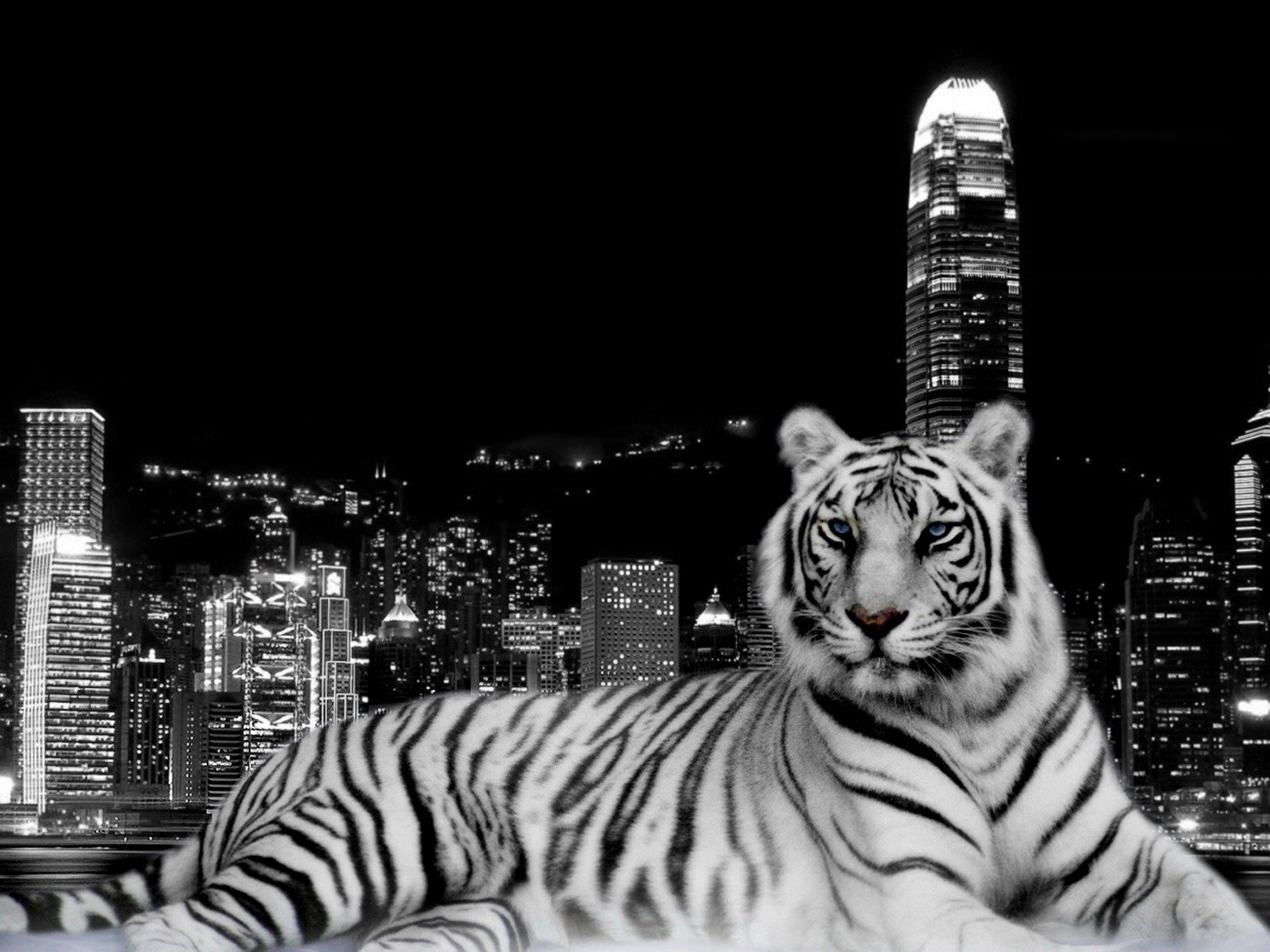 White Tiger HD Wallpapers HD Wallpapers 360 1600x1200