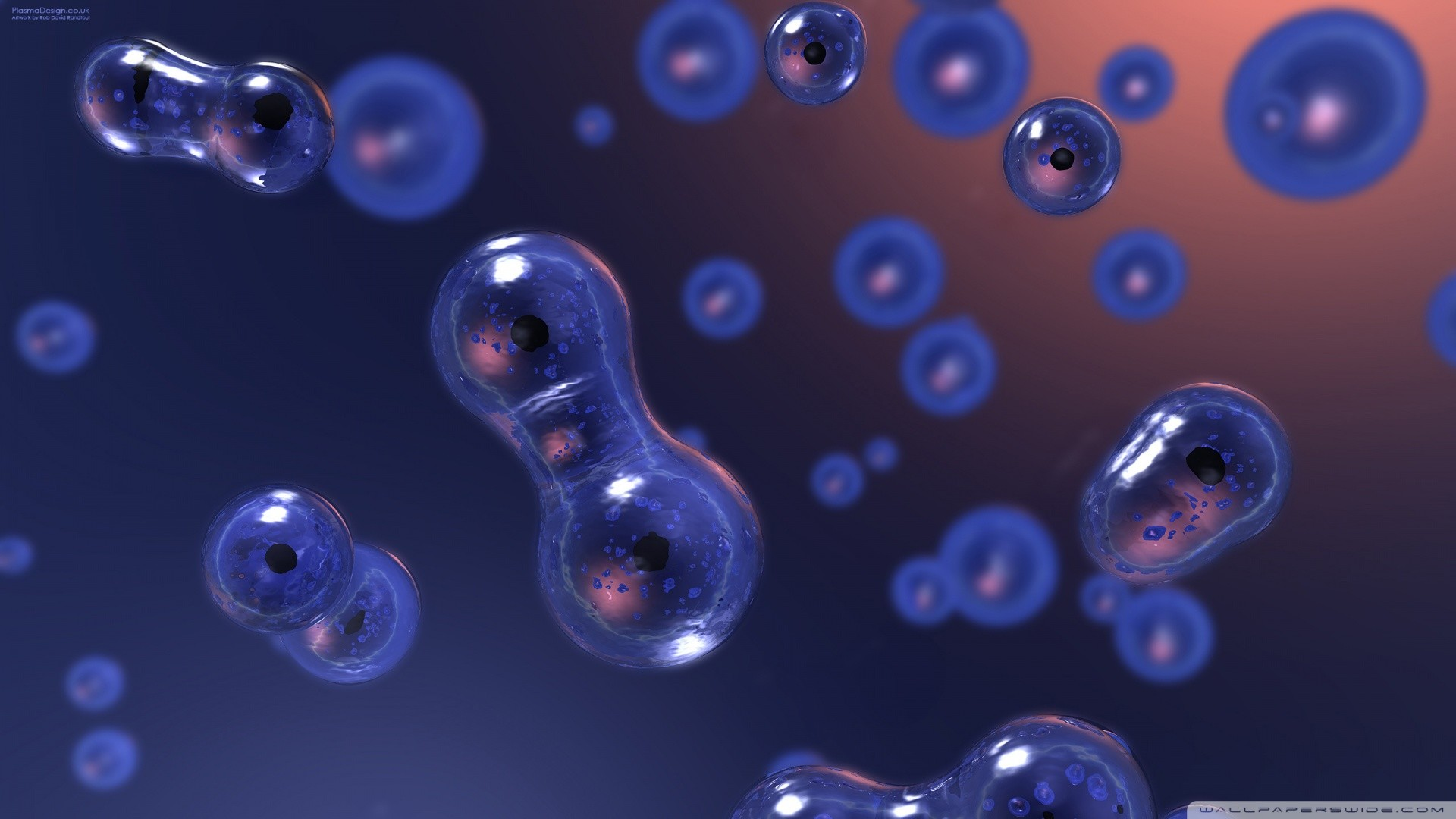 Cell Biology Wallpaper 62 images 1920x1080