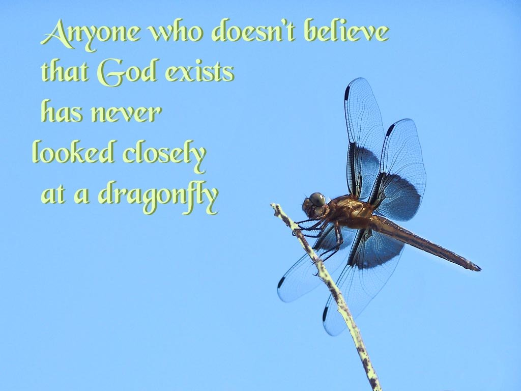 Desktop wallpaper of Dragonfly To use click to open larger file 1024x768