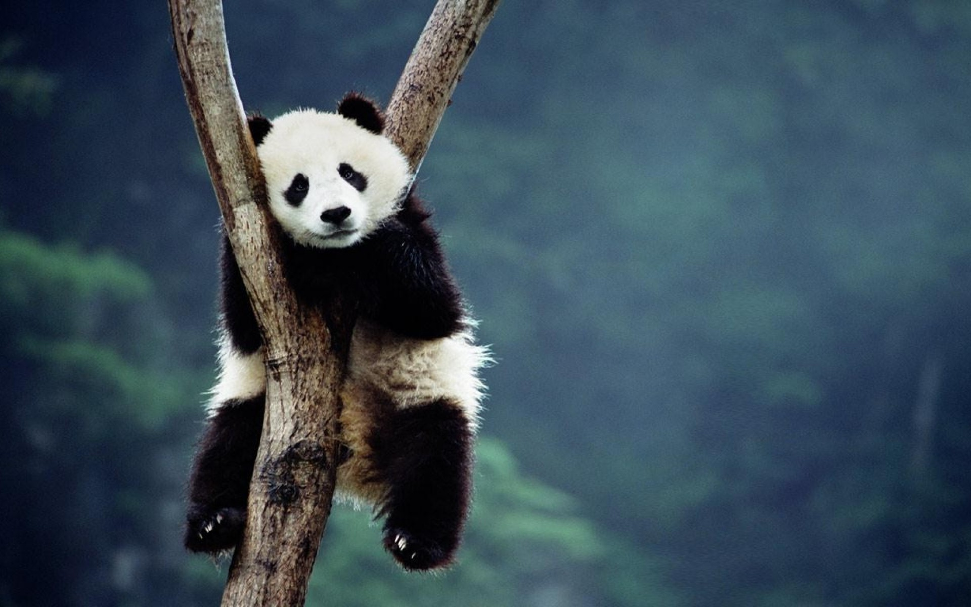 kung fu panda 2 wallpapers hd widescreen