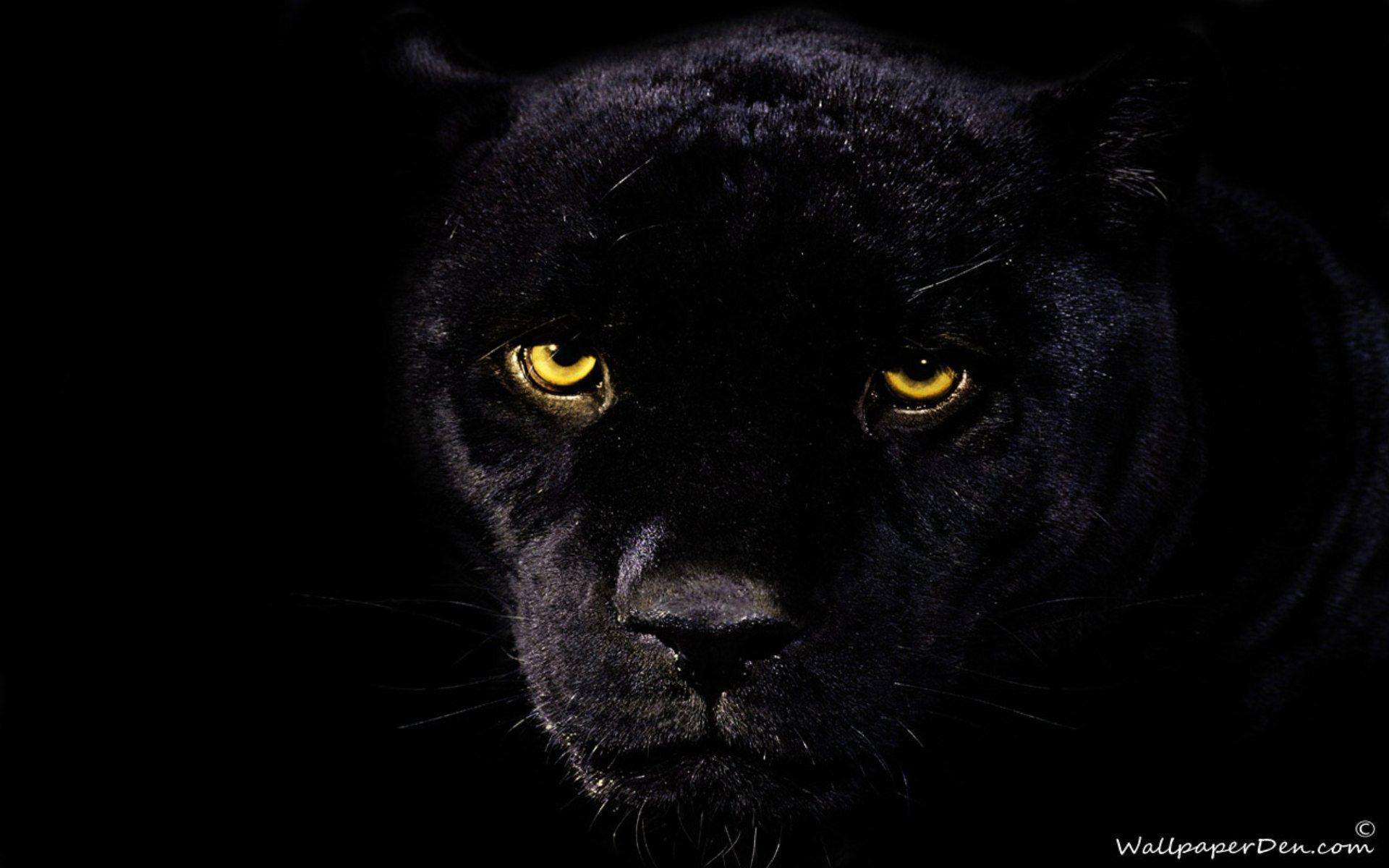 Black Panther Wallpaper Wallpaper Download 1920x1200