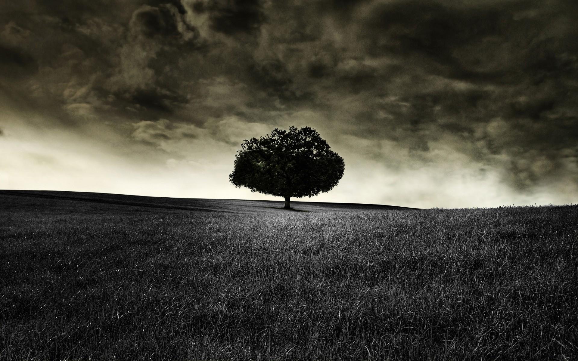 Hd wallpaper tree - Theme Bin Blog Archive Black Tree Hd Wallpaper
