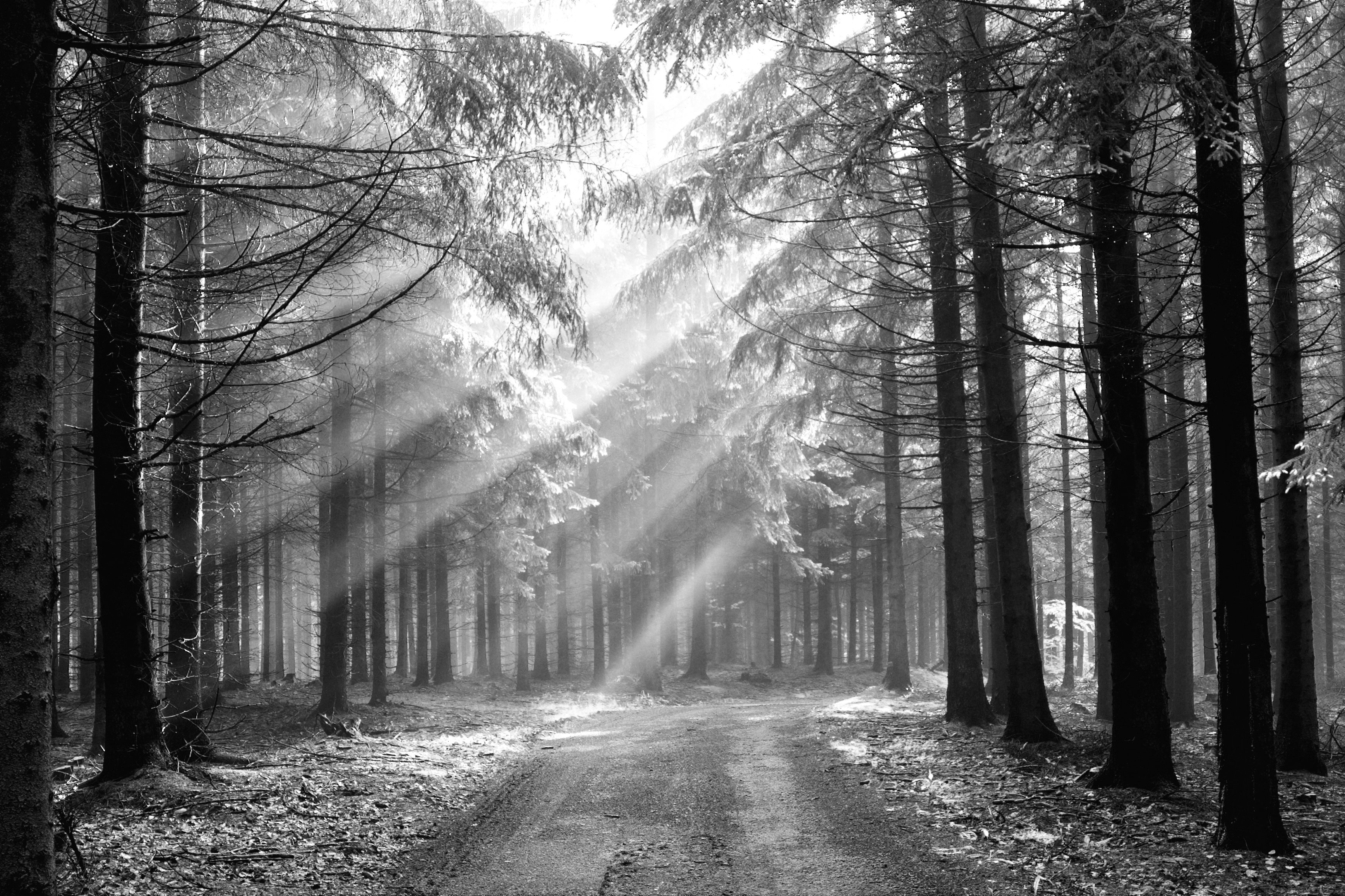 Black and white forest wallpaper wallpapersafari for Black and white forest wall mural