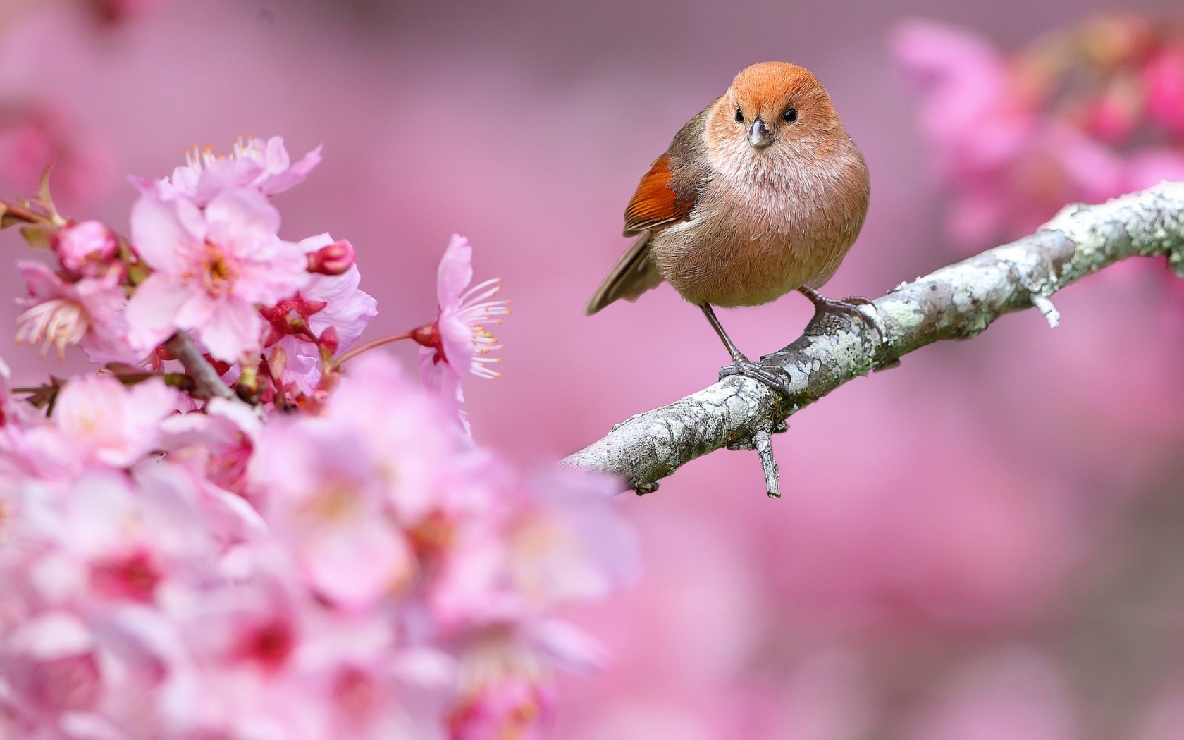 37+ Spring Flowers and Birds Wallpaper on WallpaperSafari