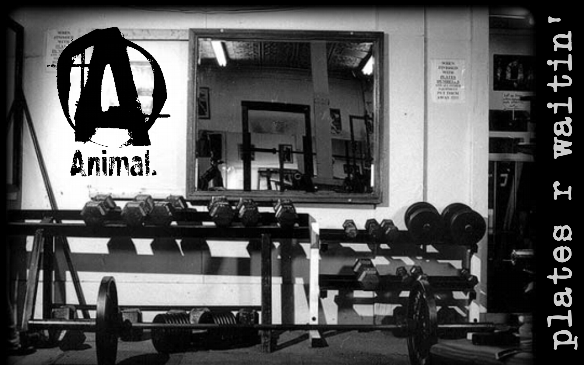 46 powerlifting motivational wallpapers on wallpapersafari - Animal pak motivational quotes ...