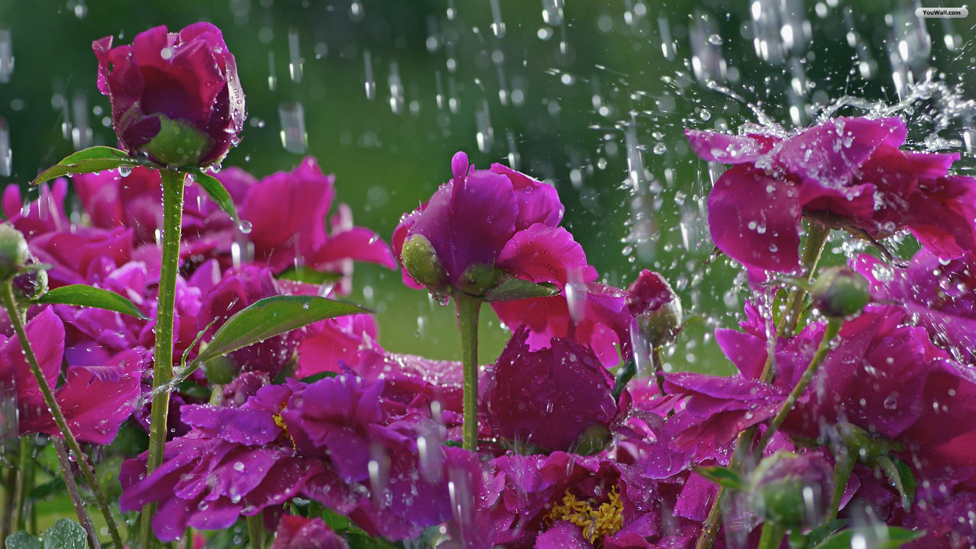 Spring Rain Wallpapers High Definition Download SubWallpaper 1920x1080