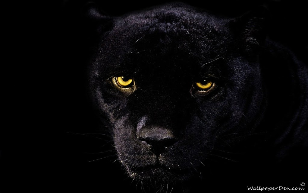 love quotes Black Panther Wallpapers 1022x639
