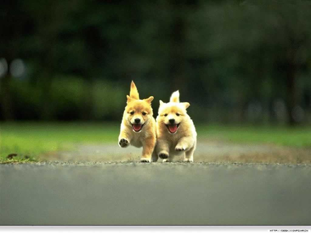 wallpaper cute dogs and puppies wallpaper cute puppies wallpaper cute 1024x768