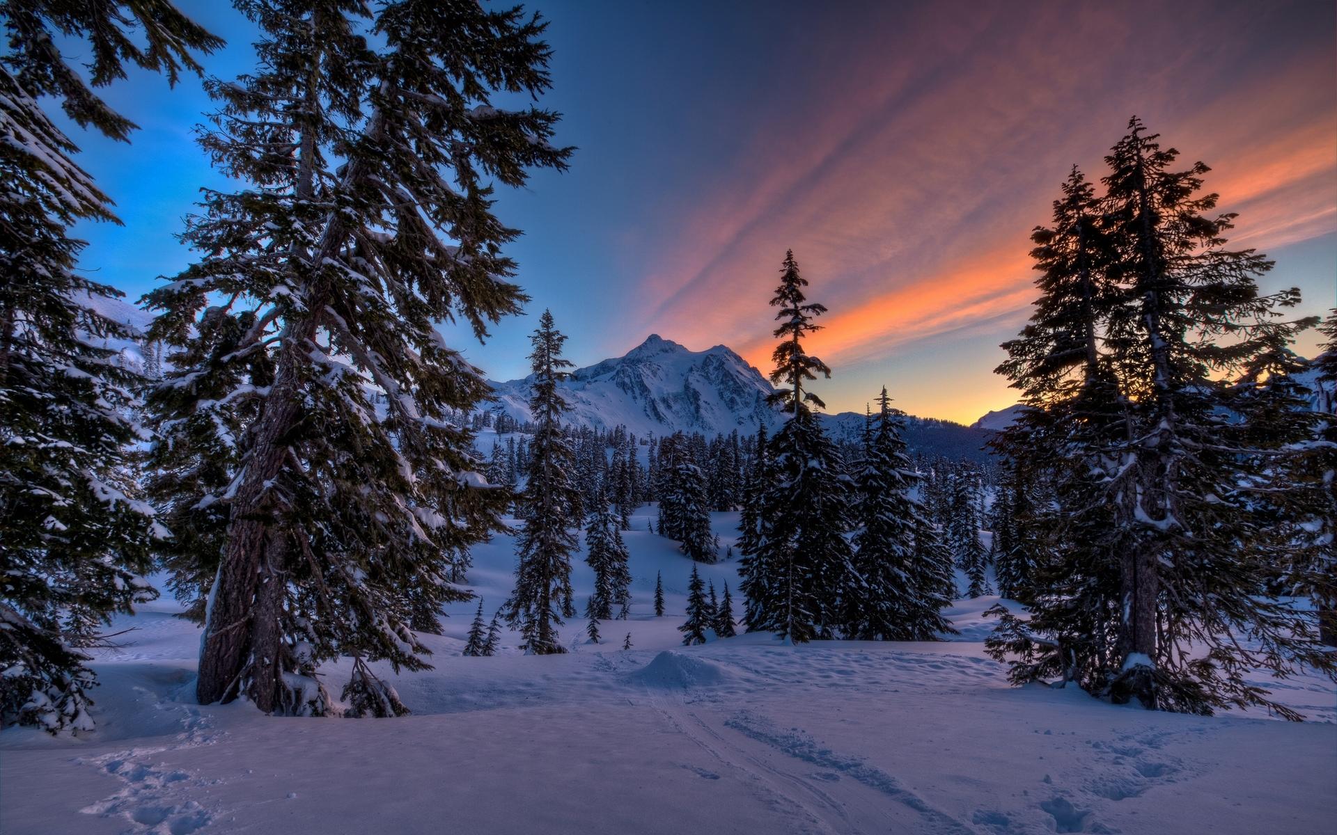 Snowy pine trees wallpaper 29595 1920x1200