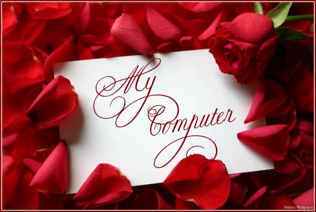 Red Roses Wallpaper Red Roses Background for Desktops 1024x687