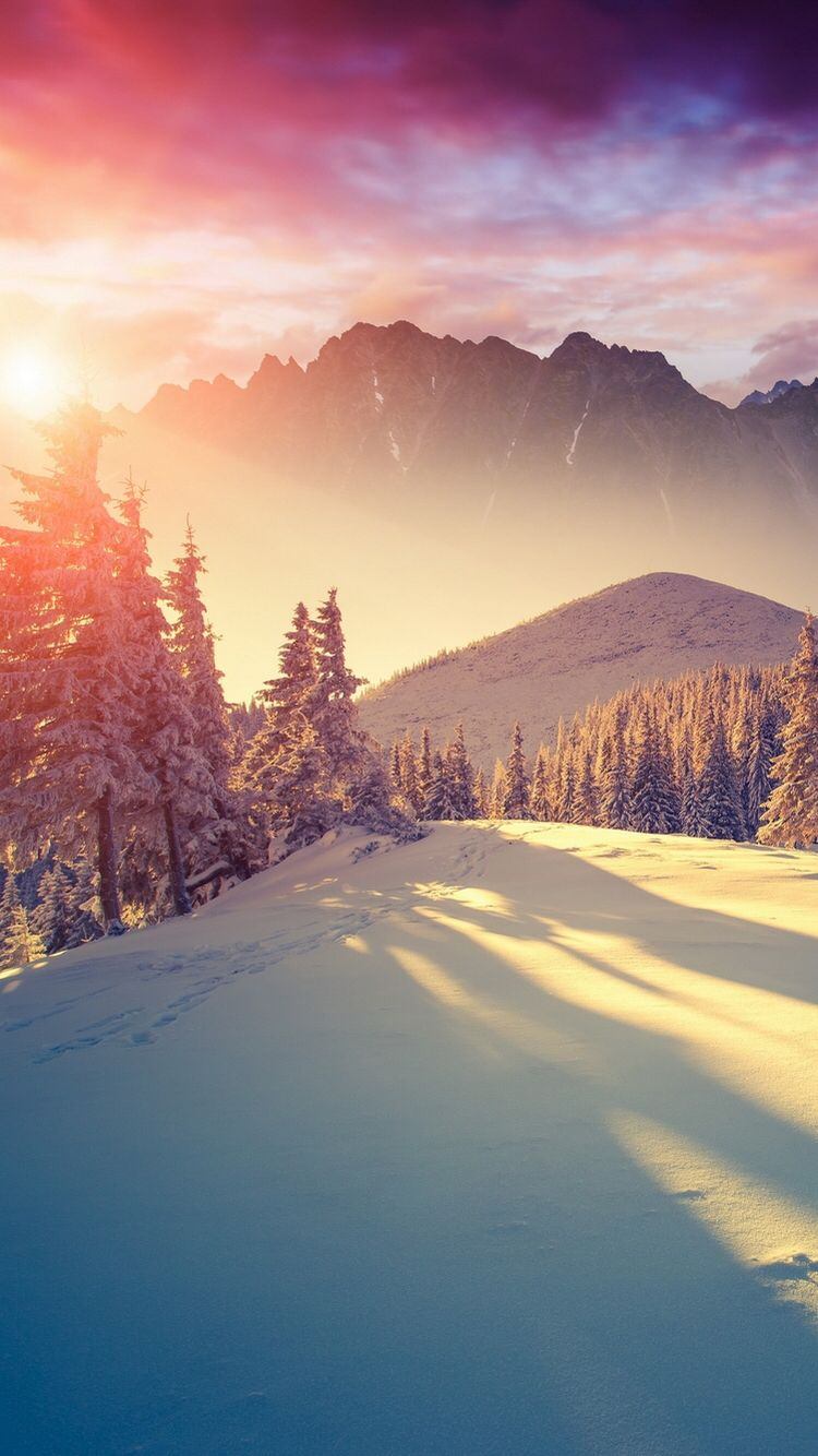 Free Download Winter Allys Cool And Cute Backgrounds In 2019