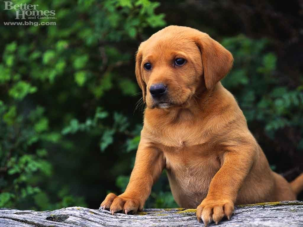 Cute Puppy   Puppies Wallpaper 13986328 1024x768