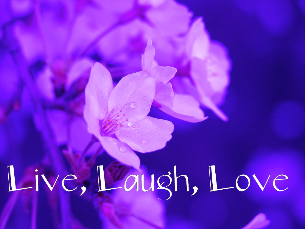 3d Love Live Wallpaper For Mobile : Live Laugh Love Desktop Wallpaper - WallpaperSafari