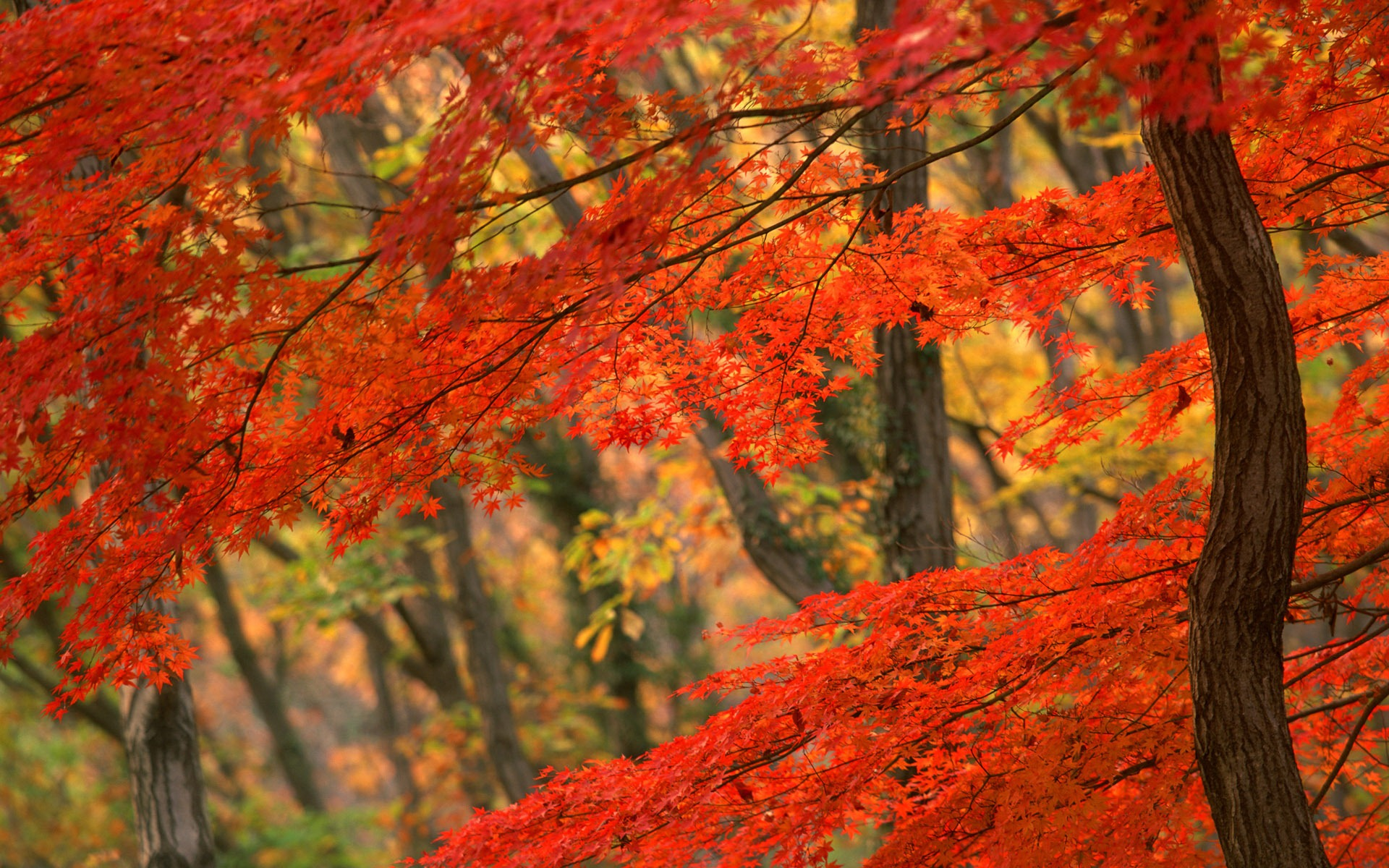 Fall Leaves Desktop Wallpaper Hd   Viewing Gallery 1920x1200