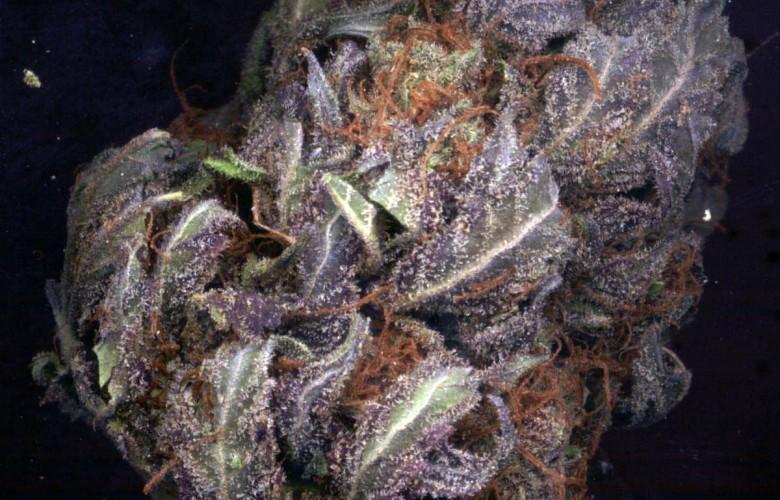 Purple Kush Wallpaper - WallpaperSafariPurple Kush Wallpaper