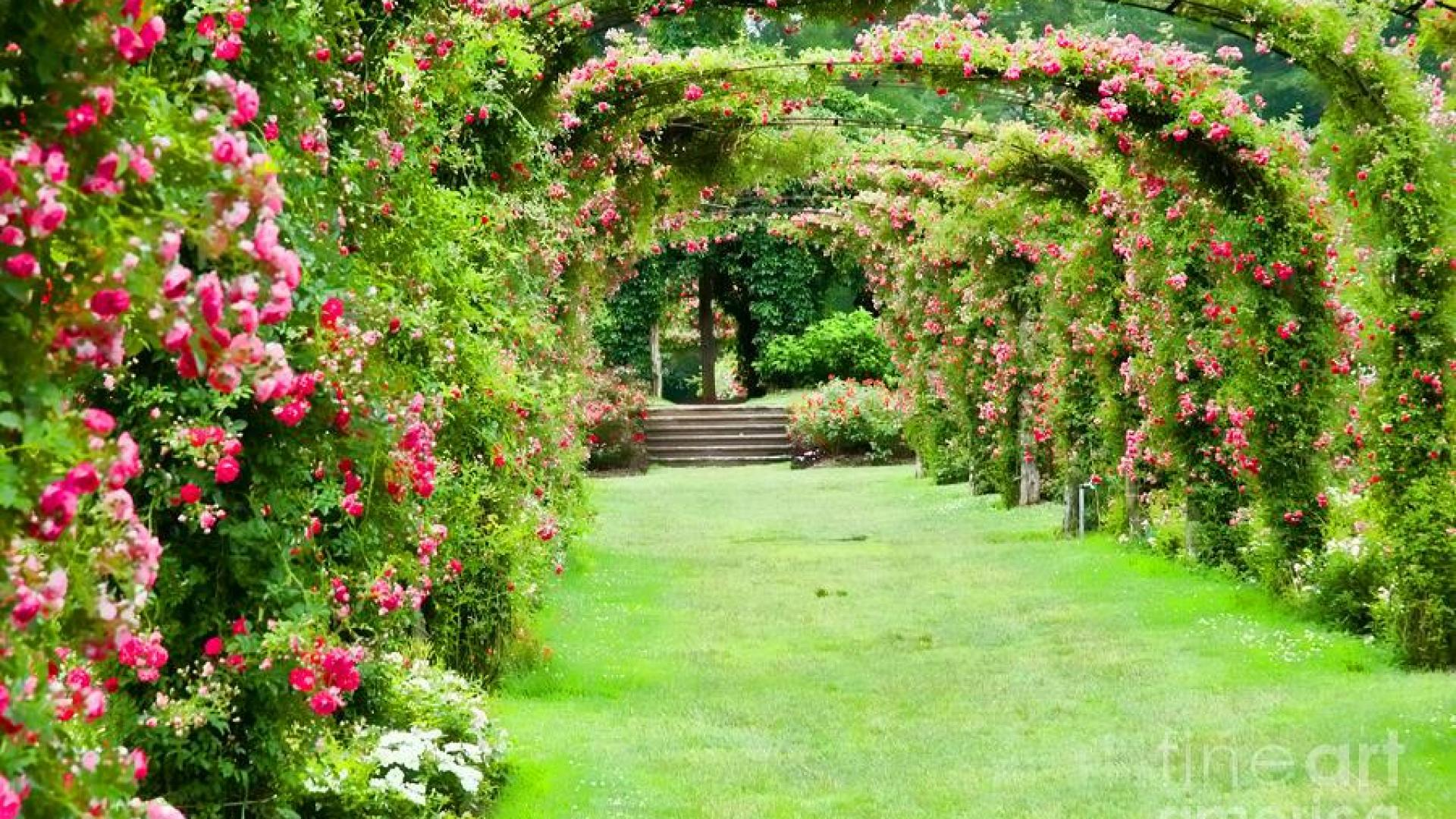 Rose Garden Wallpaper Desktops